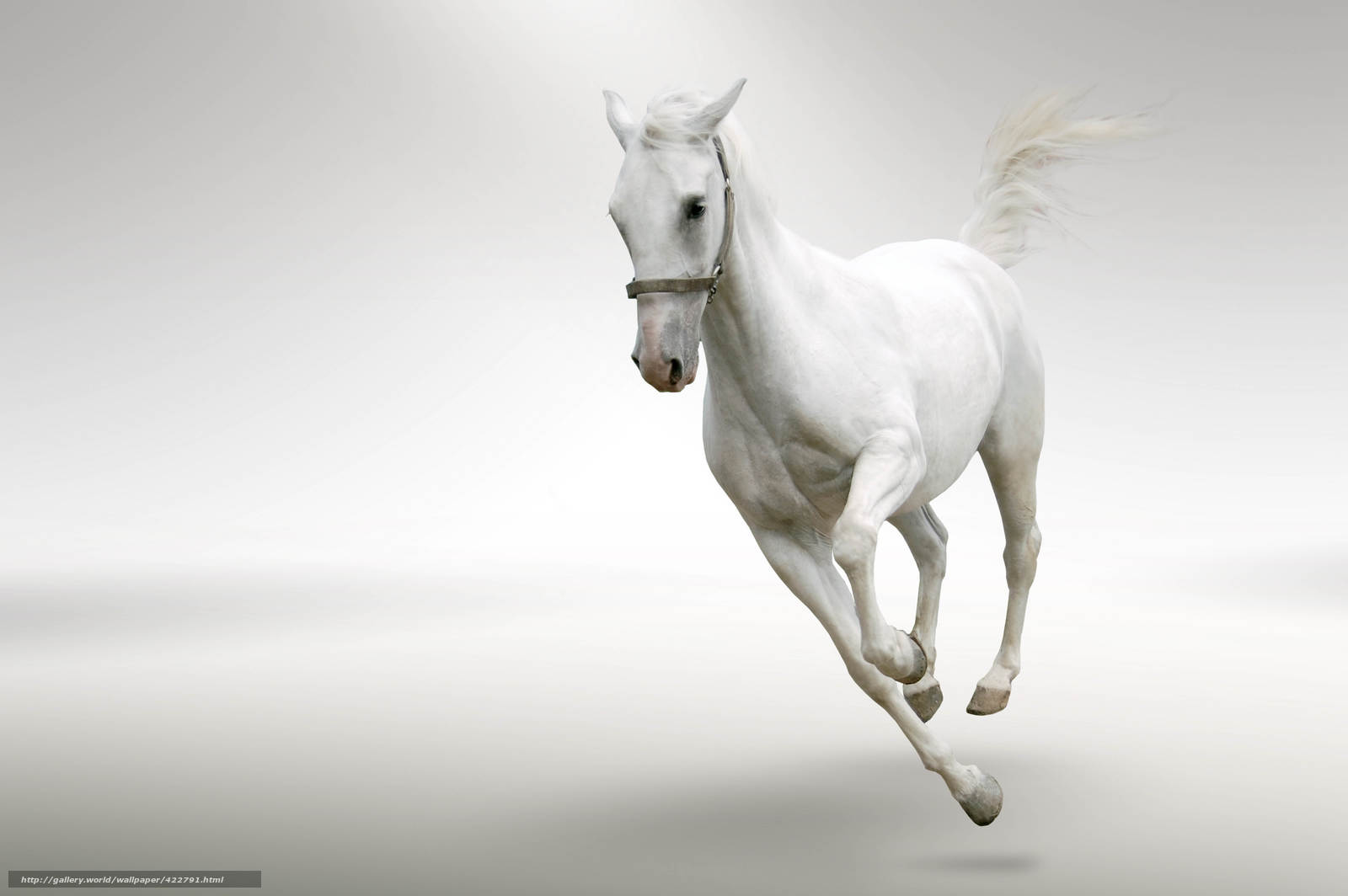 Download wallpaper horse, run, gray background, motion ...