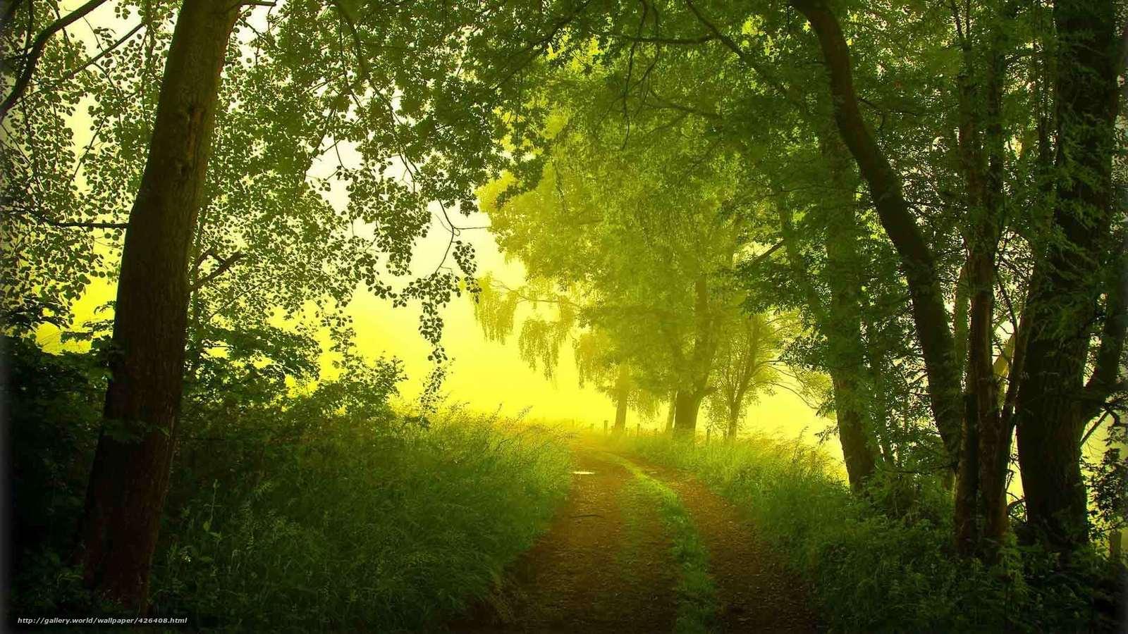 Descargar gratis verano maana niebla bosque fondos de escritorio en la resolucin 1920x1080 - Fondos de escritorio verano ...
