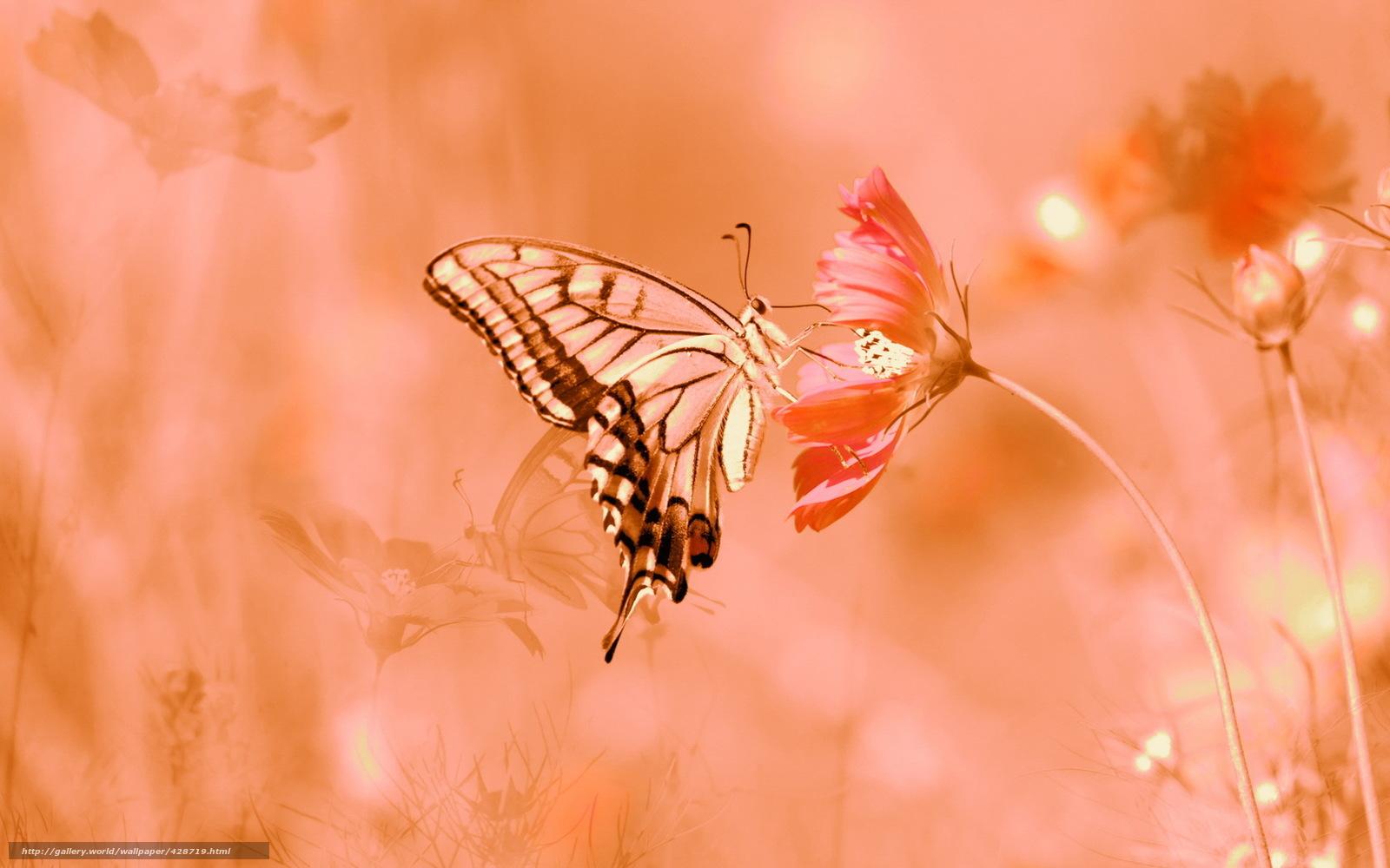 Обои лето цветы бабочка природа