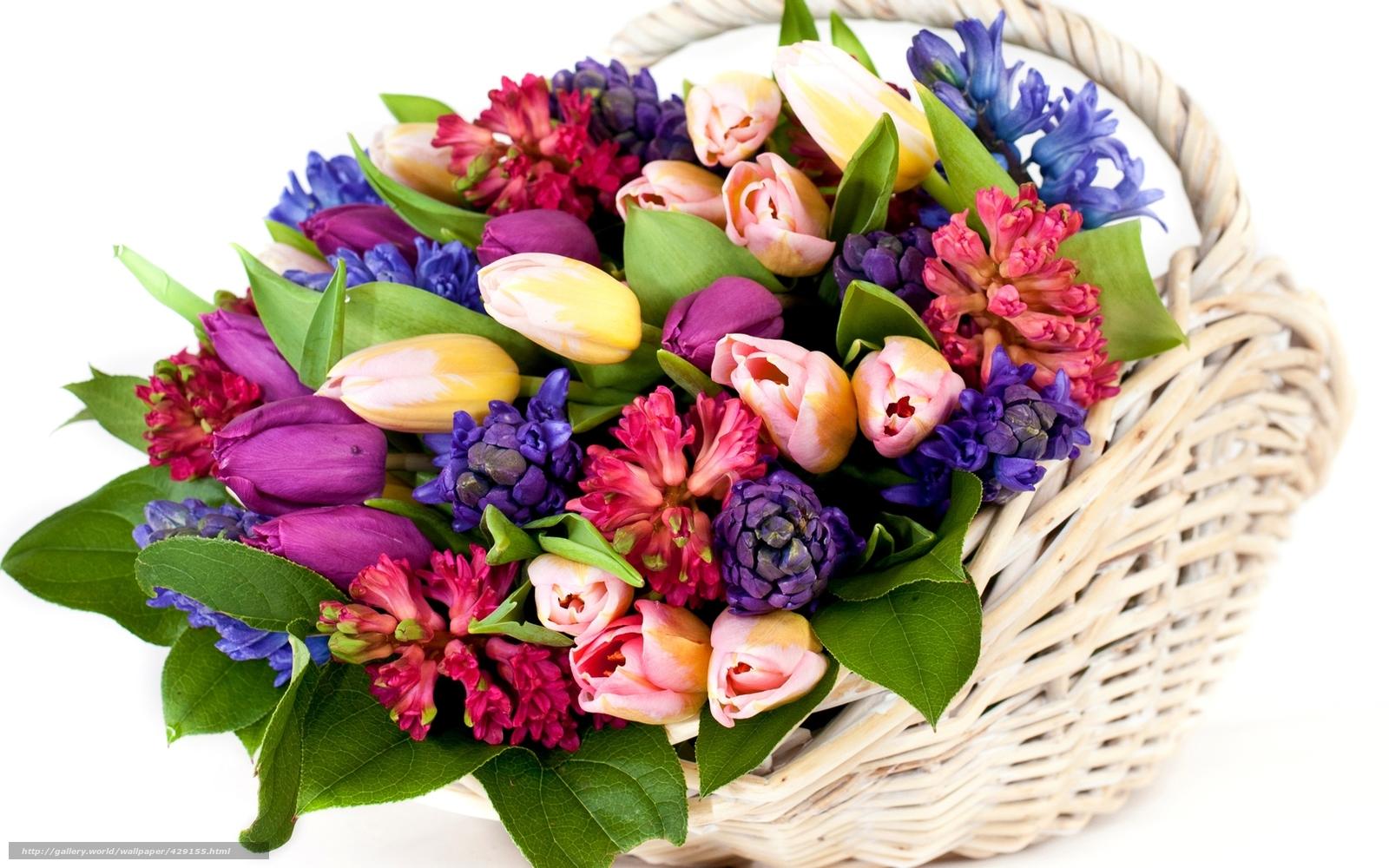 scaricare gli sfondi Tulipani, fiori, cestino, mazzo di fiori Sfondi ...: it.gde-fon.com/download/Tulipani_fiori_cestino_mazzo-di/429155...