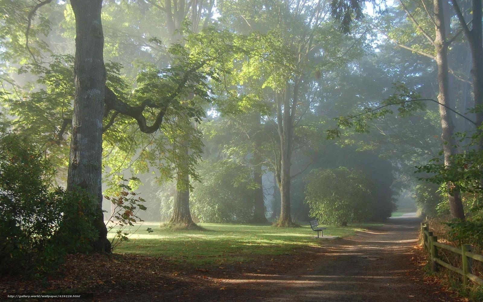 Утро парк