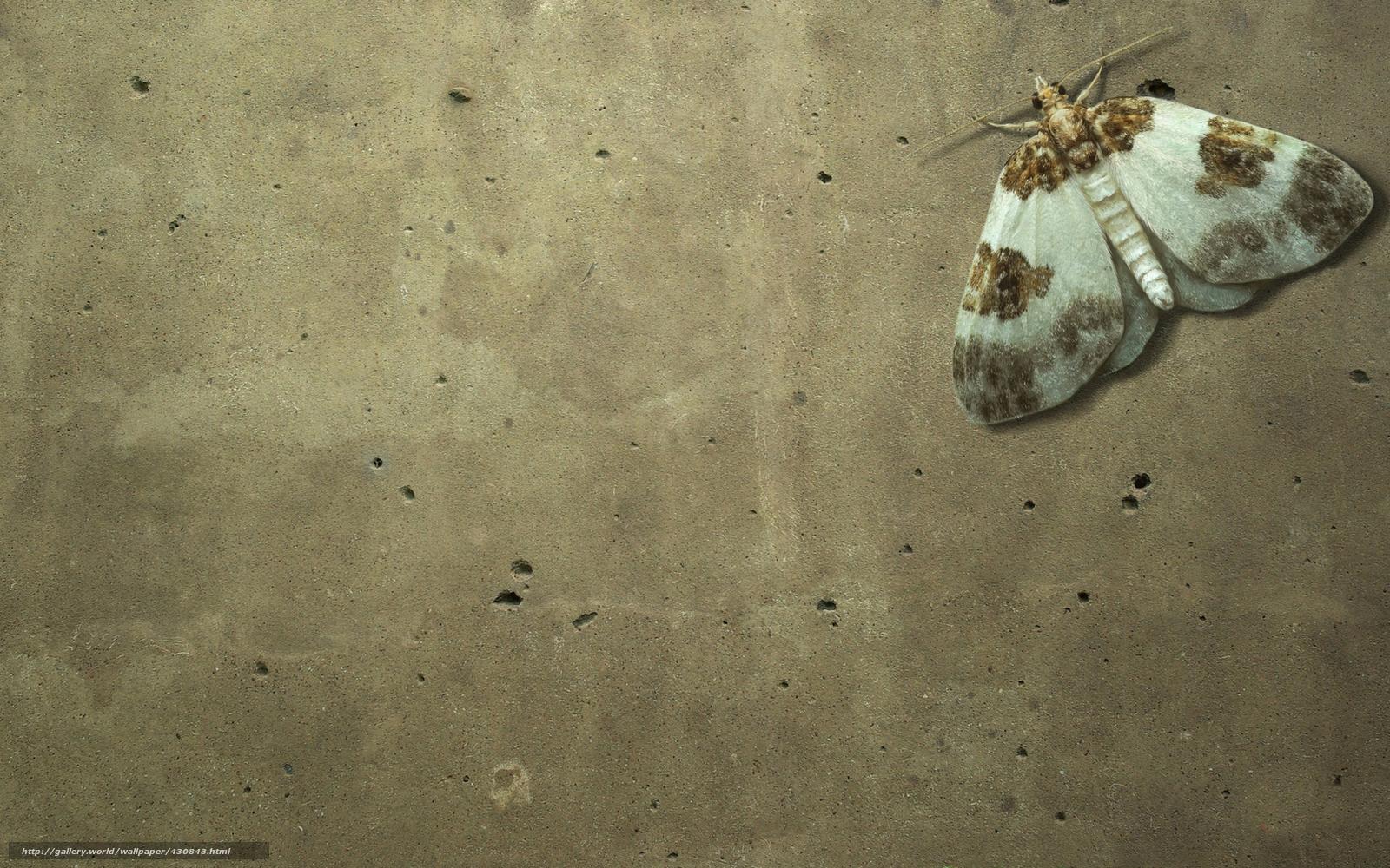 tlcharger fond d 39 ecran papillon papillon insecte mur fonds d 39 ecran gratuits pour votre. Black Bedroom Furniture Sets. Home Design Ideas