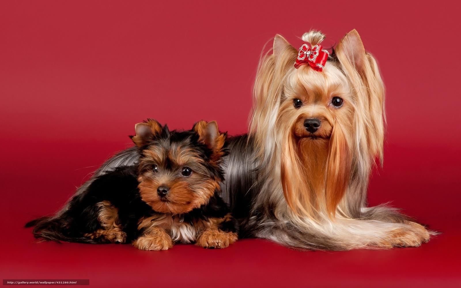 Собаки звезд очень смешные фото до слез  Womans Day
