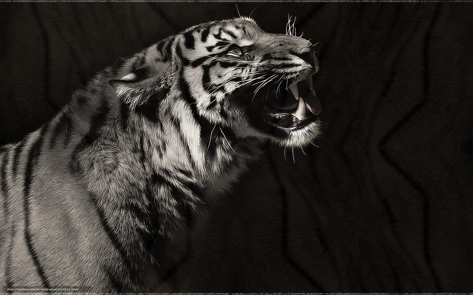 tlcharger fond d 39 ecran tigre art prdateur noir et blanc fonds d 39 ecran gratuits pour votre. Black Bedroom Furniture Sets. Home Design Ideas