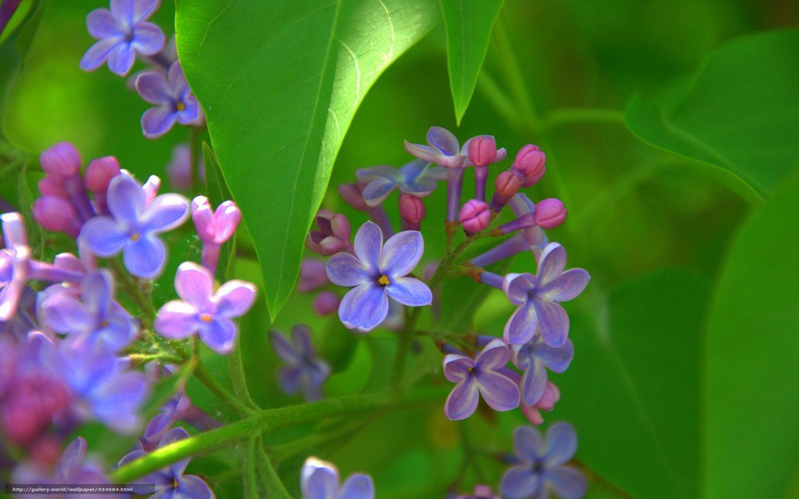 Цветы 434694 ручное изменение размера