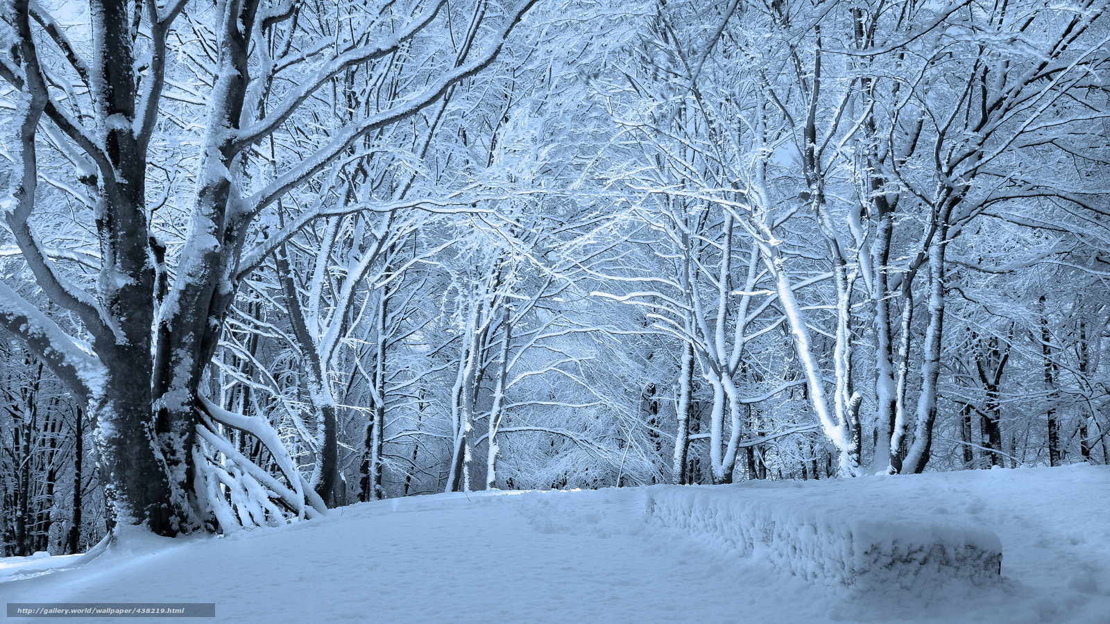 winter forest snow wallpaper 1019791