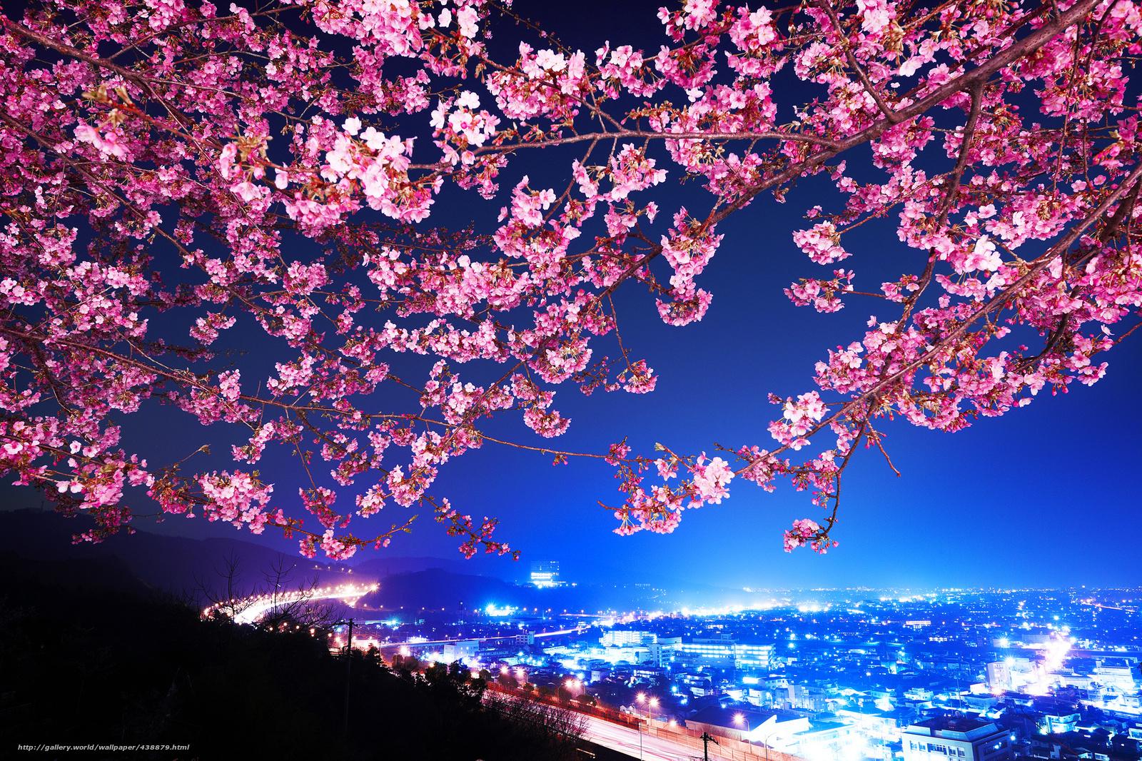 wallpaper japan, Japan, sakura, night city free desktop wallpaper