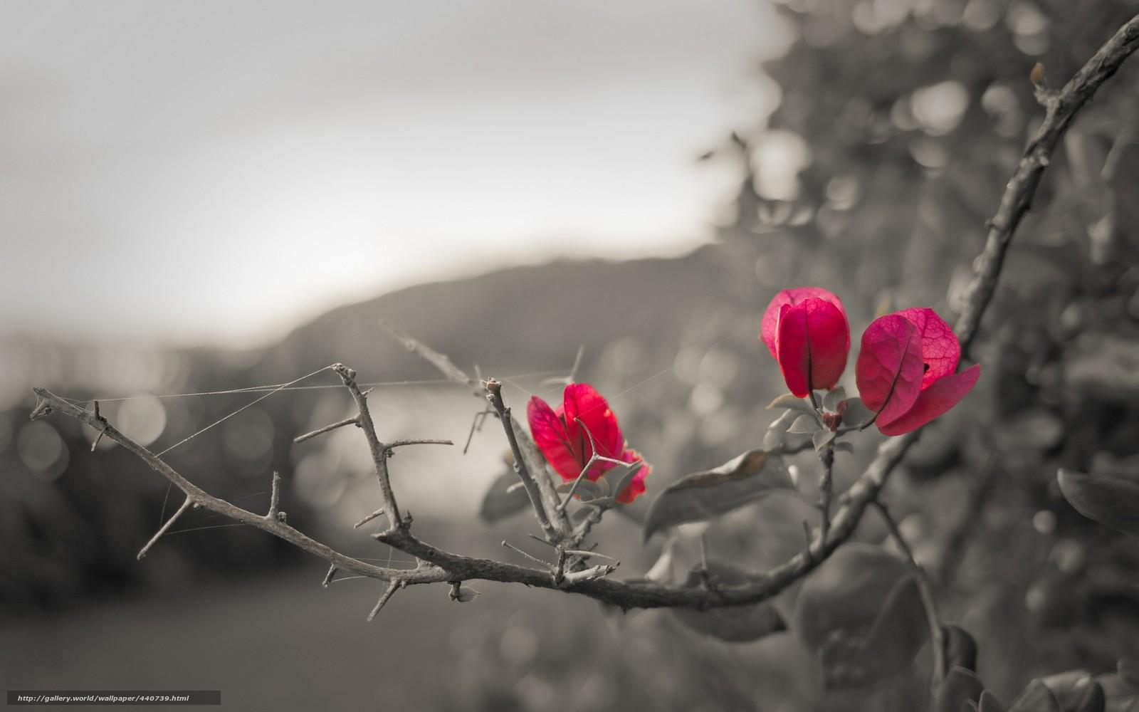 Papel de parede Flores...