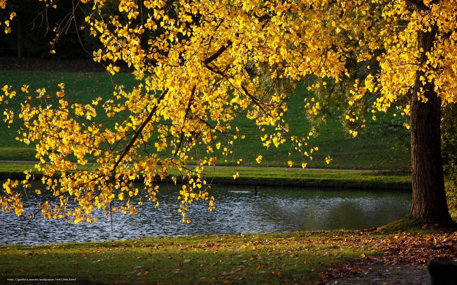 Красивые картинки необычные 36 фото  Прикольные