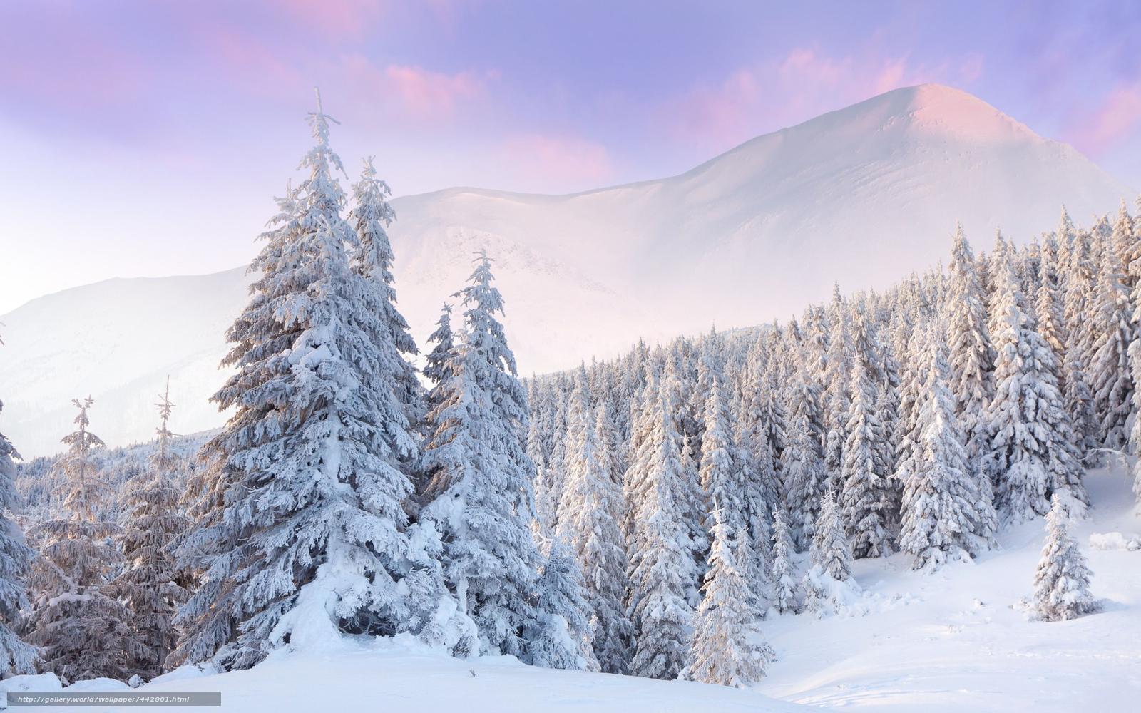 Красивая зима 60 фото  kaifologru