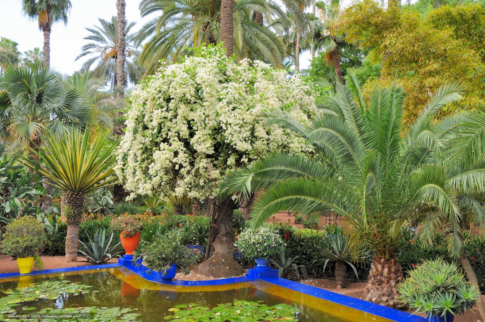 Descargar Gratis Marruecos Marrakech Jardin Majorelle
