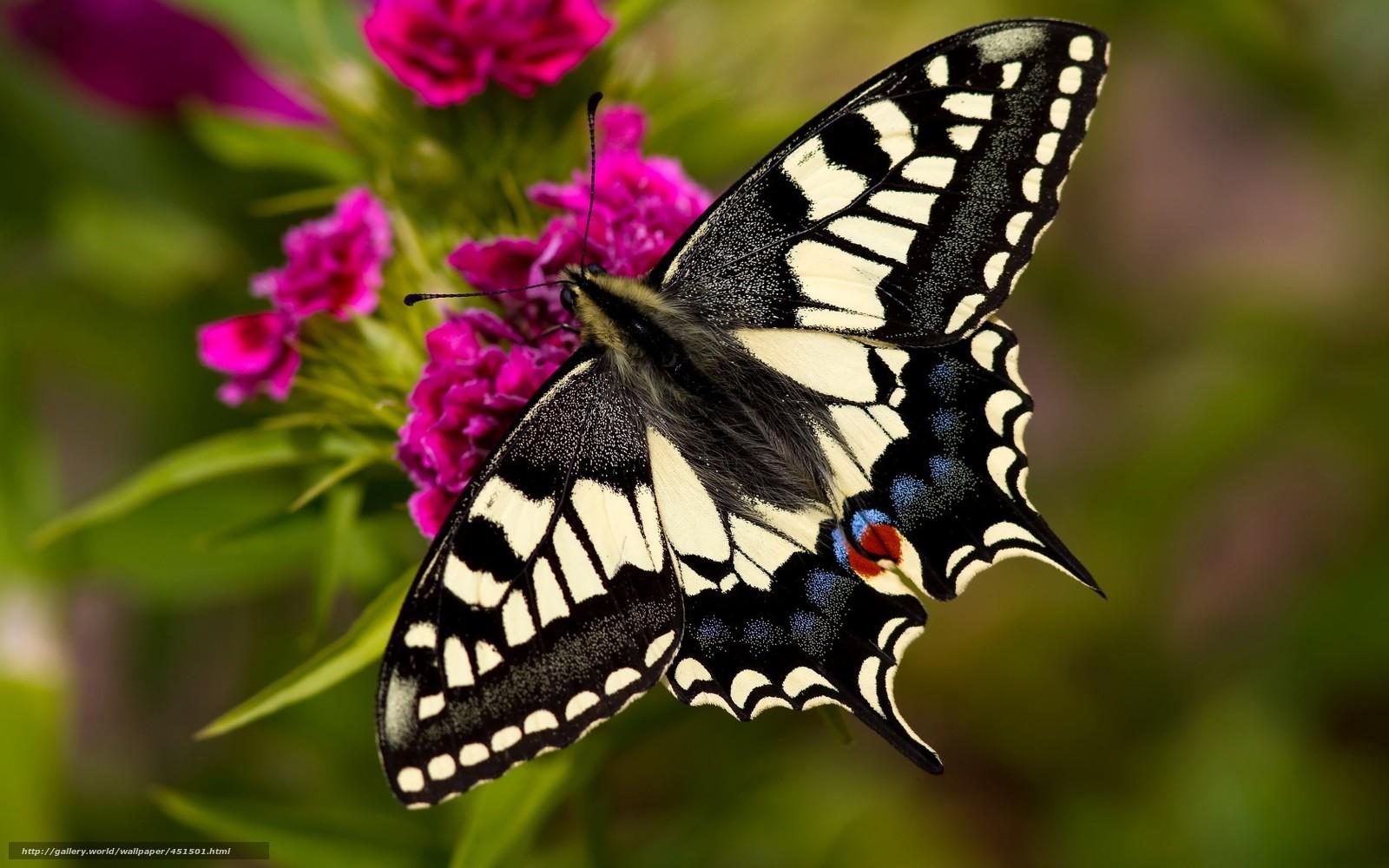 Обои рабочего стола скачать бесплатно бабочка 15