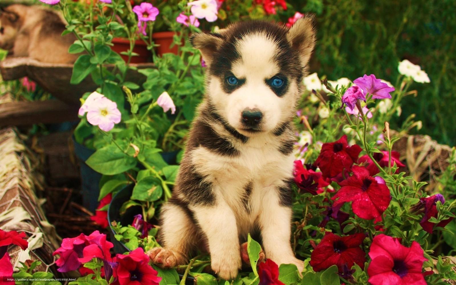 Скачать обои собака щенок цветы злой