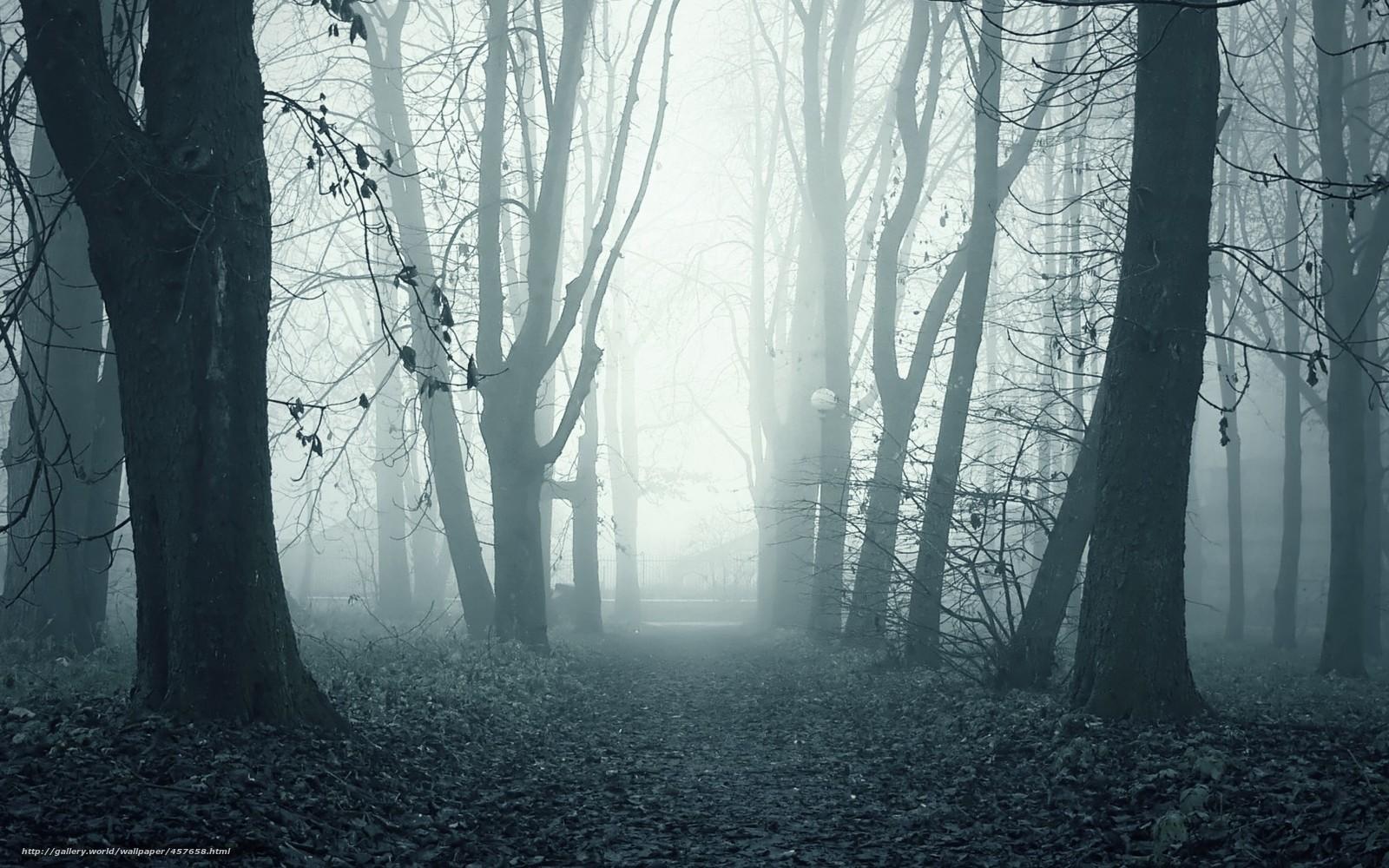 Мрак лес