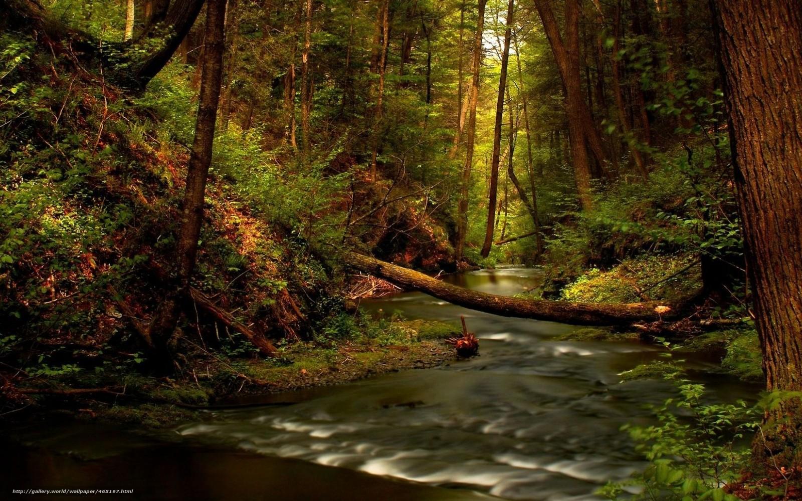 Обои кусты Природа ручей цветы Деревья камни парк