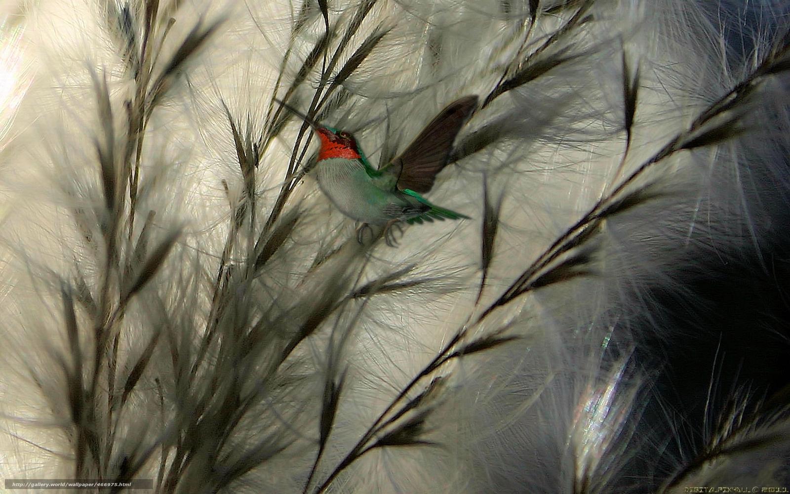 Tlcharger fond d 39 ecran usine oiseau papier peint fond for Papier peint ecran
