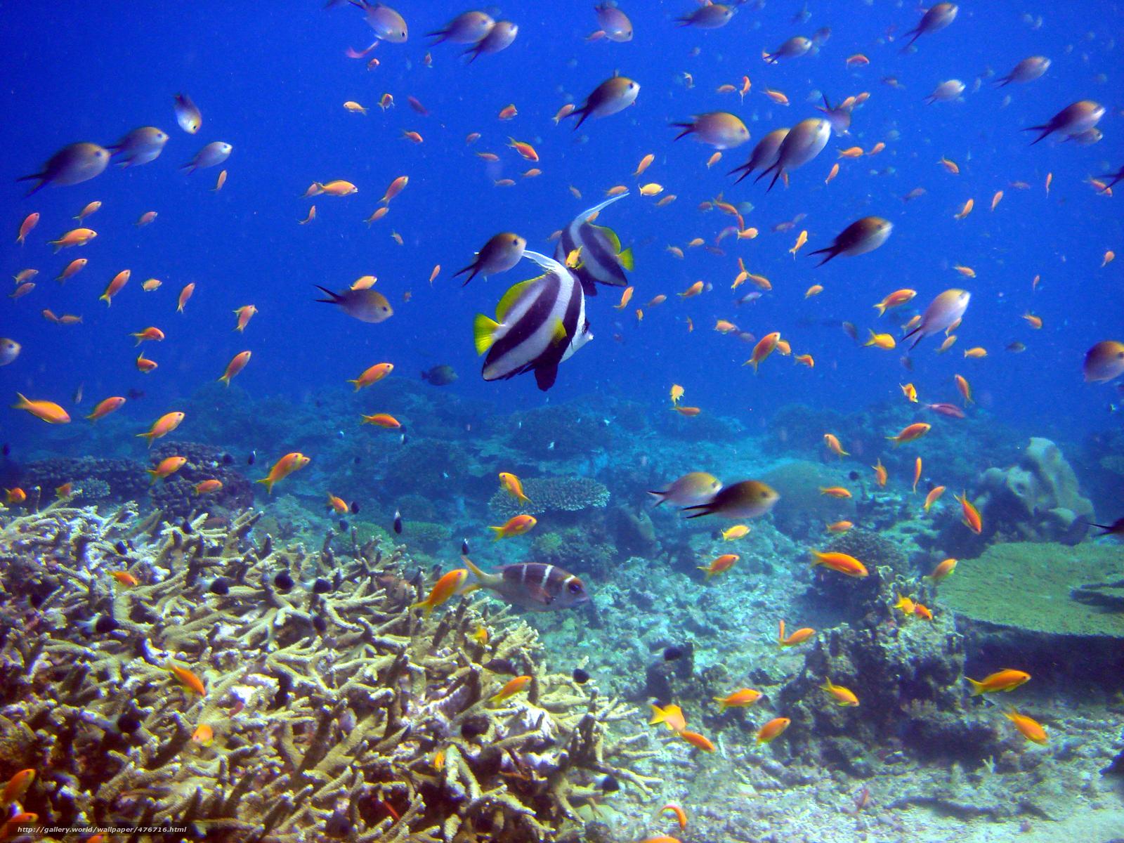 El mundo submarino arrecifes y peces los corales pescado