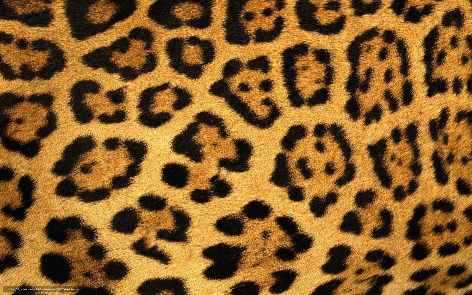 Animal Wallpaper Piel
