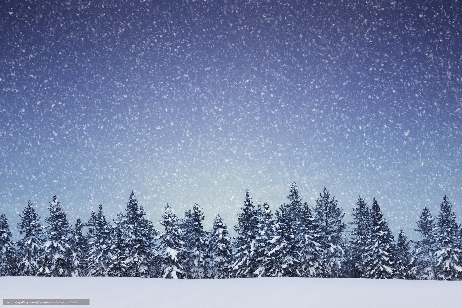 free desktop wallpaper winter trees