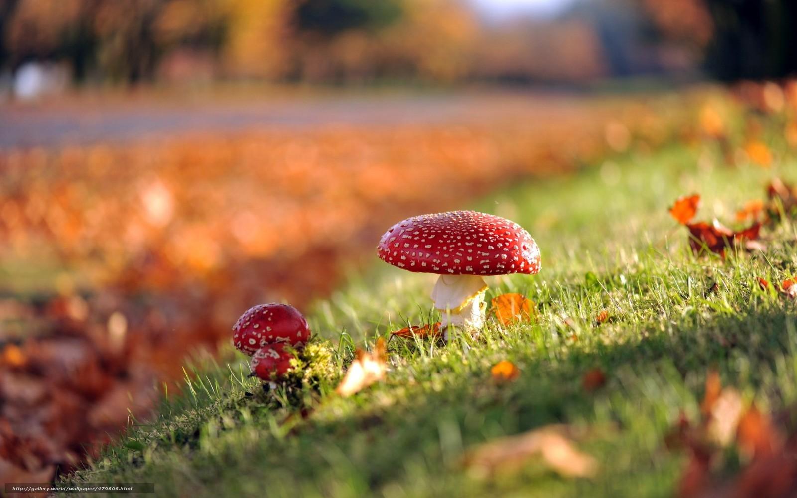 Осень грибы картинка