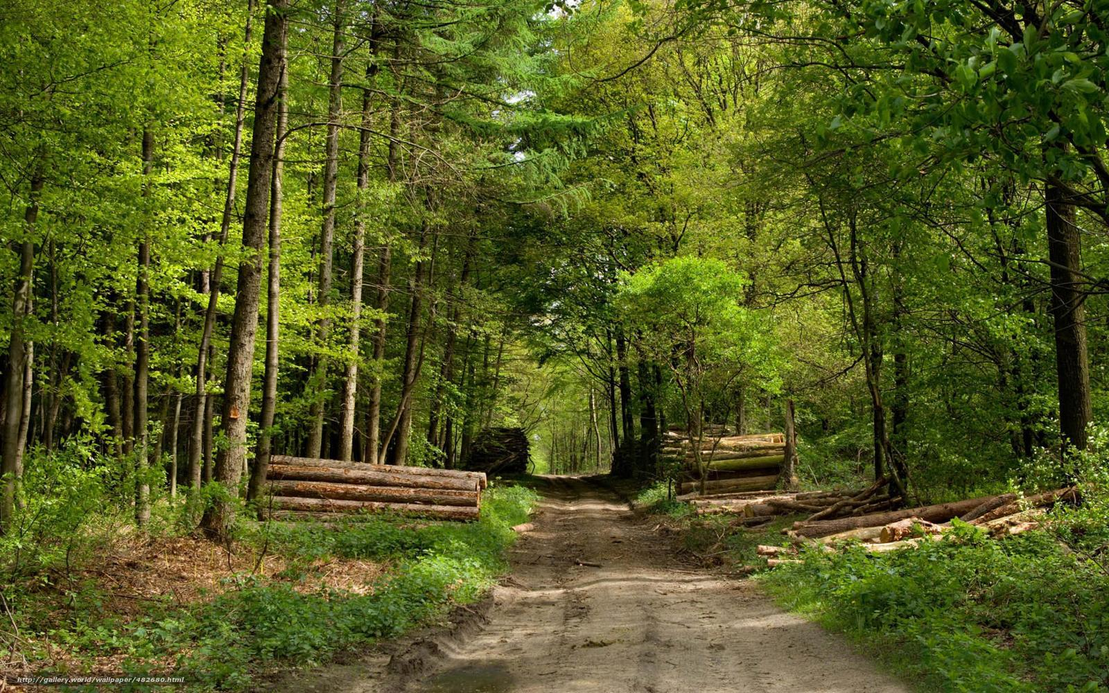 Forest Road wallpaper - 1015947