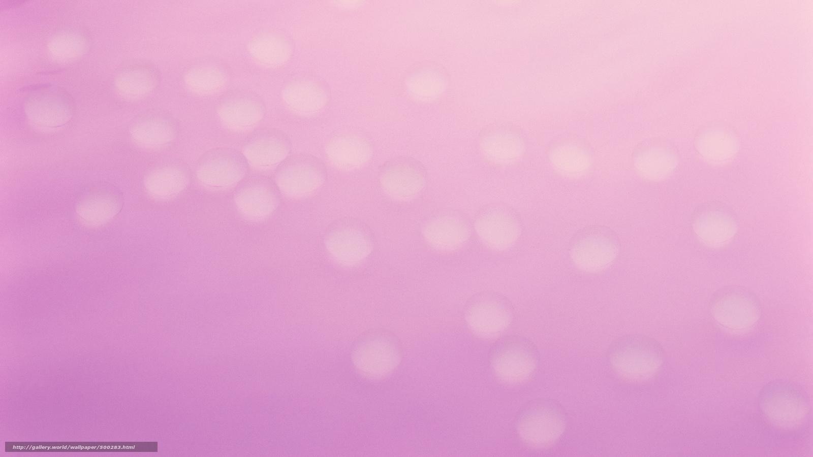 Розовые хризантемы обои для рабочего стола картинки и