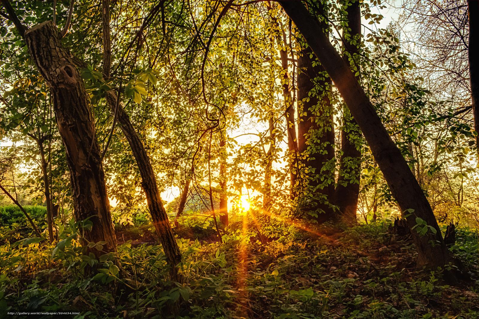Скачать обои лес деревья солнце лучи