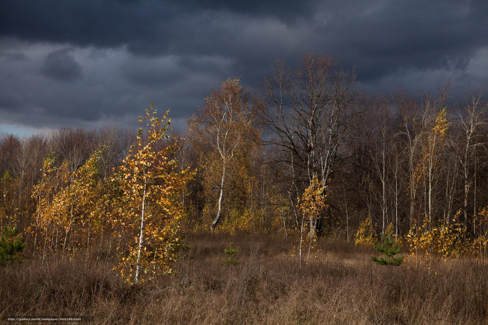 Деревья природа тучи осень