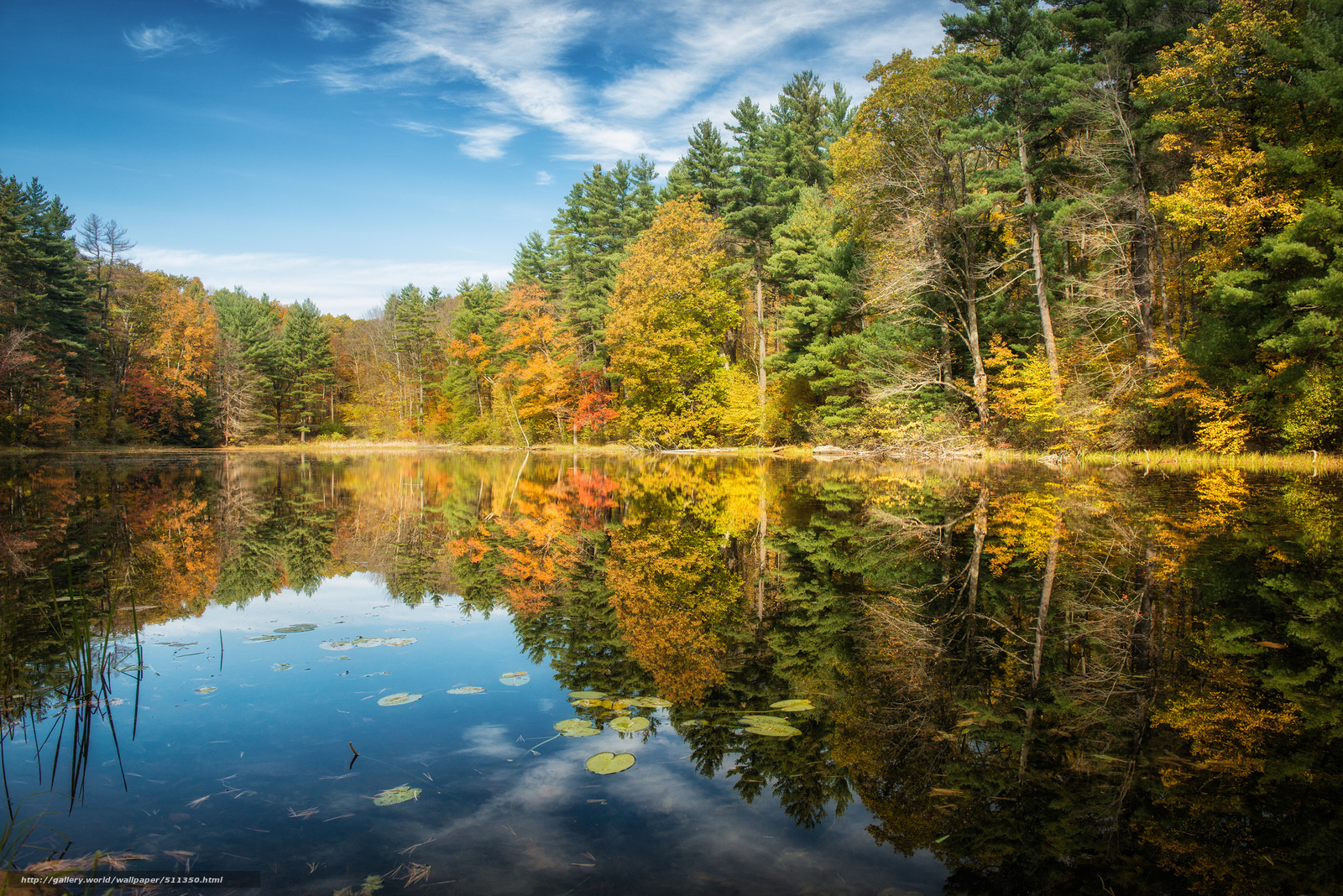 Download Wallpaper Norfolk, Connecticut, Lake, Forest Free