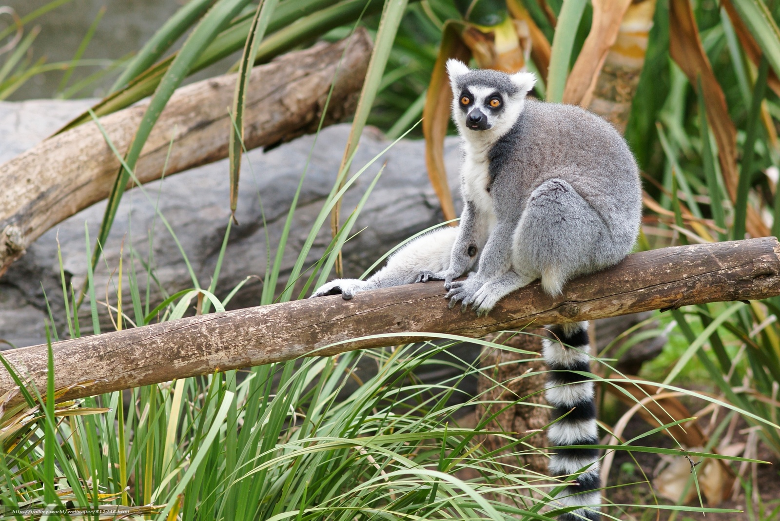 download wallpaper 3840x2160 lemur-#13
