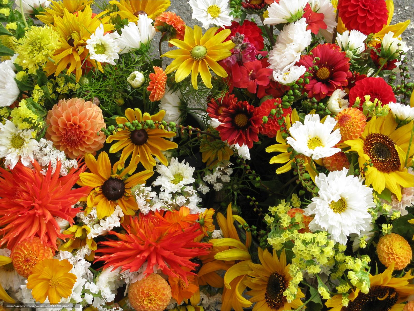 tlcharger fond d 39 ecran fleurs parterre de fleurs nature fonds d 39 ecran gratuits pour votre. Black Bedroom Furniture Sets. Home Design Ideas