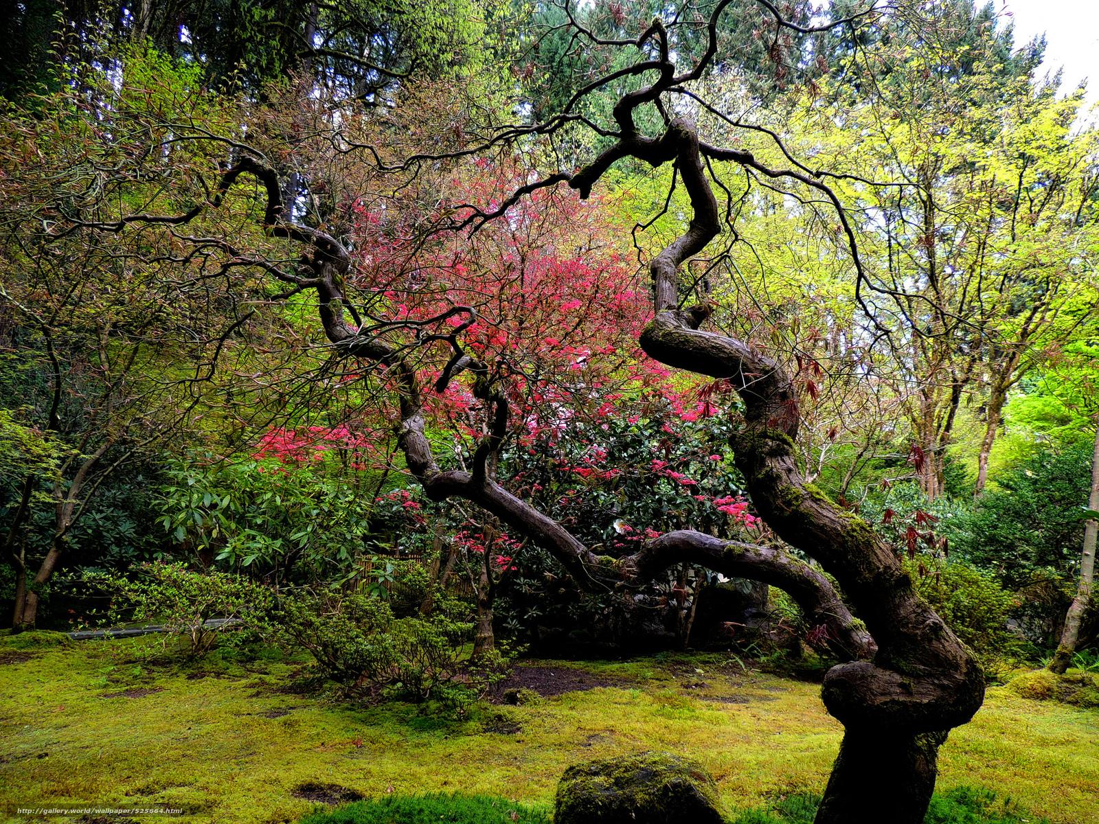 Tlcharger fond d 39 ecran jardin japonais arbre courb - Arbre pour jardin japonais ...