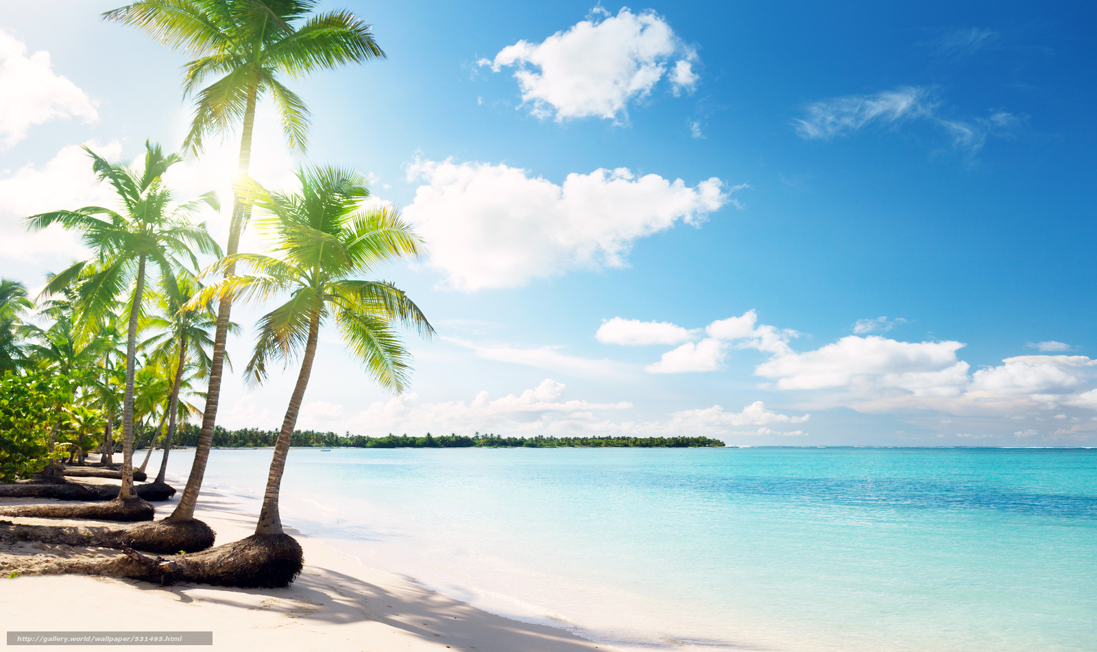 Download wallpaper saribbean, beach, palm trees free ...