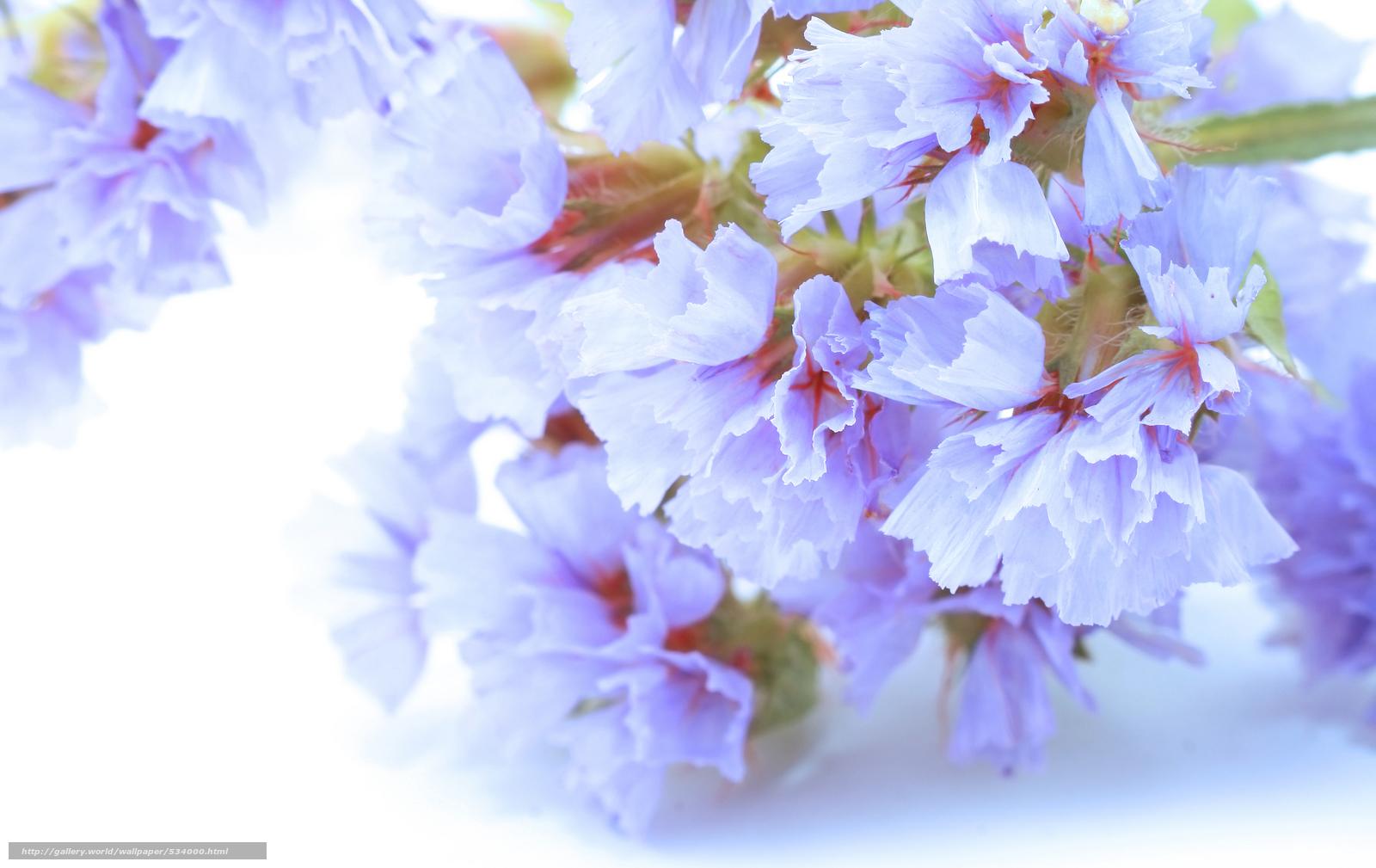 Хрупкость нежность цветы лепестки