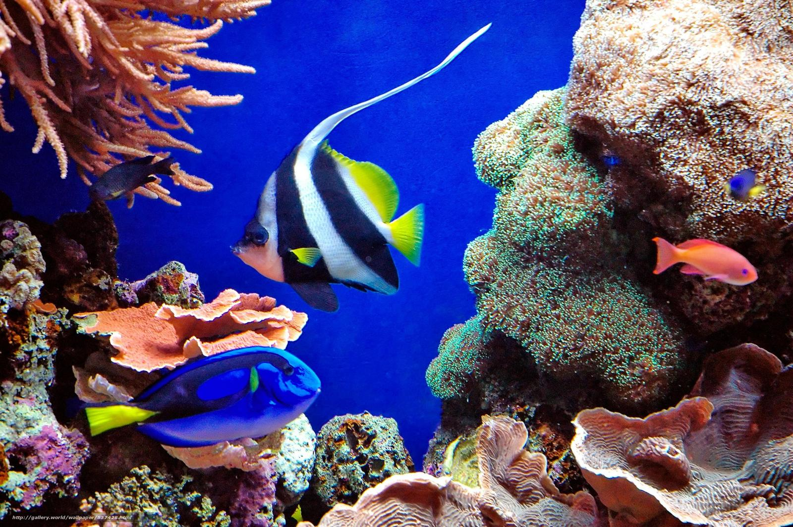 tropic fish - photo #24