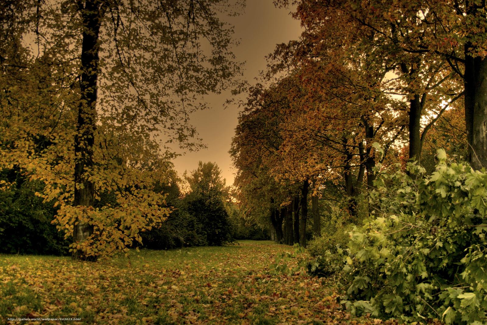 tlcharger fond d 39 ecran automne for t arbres paysage fonds d 39 ecran gratuits pour votre. Black Bedroom Furniture Sets. Home Design Ideas