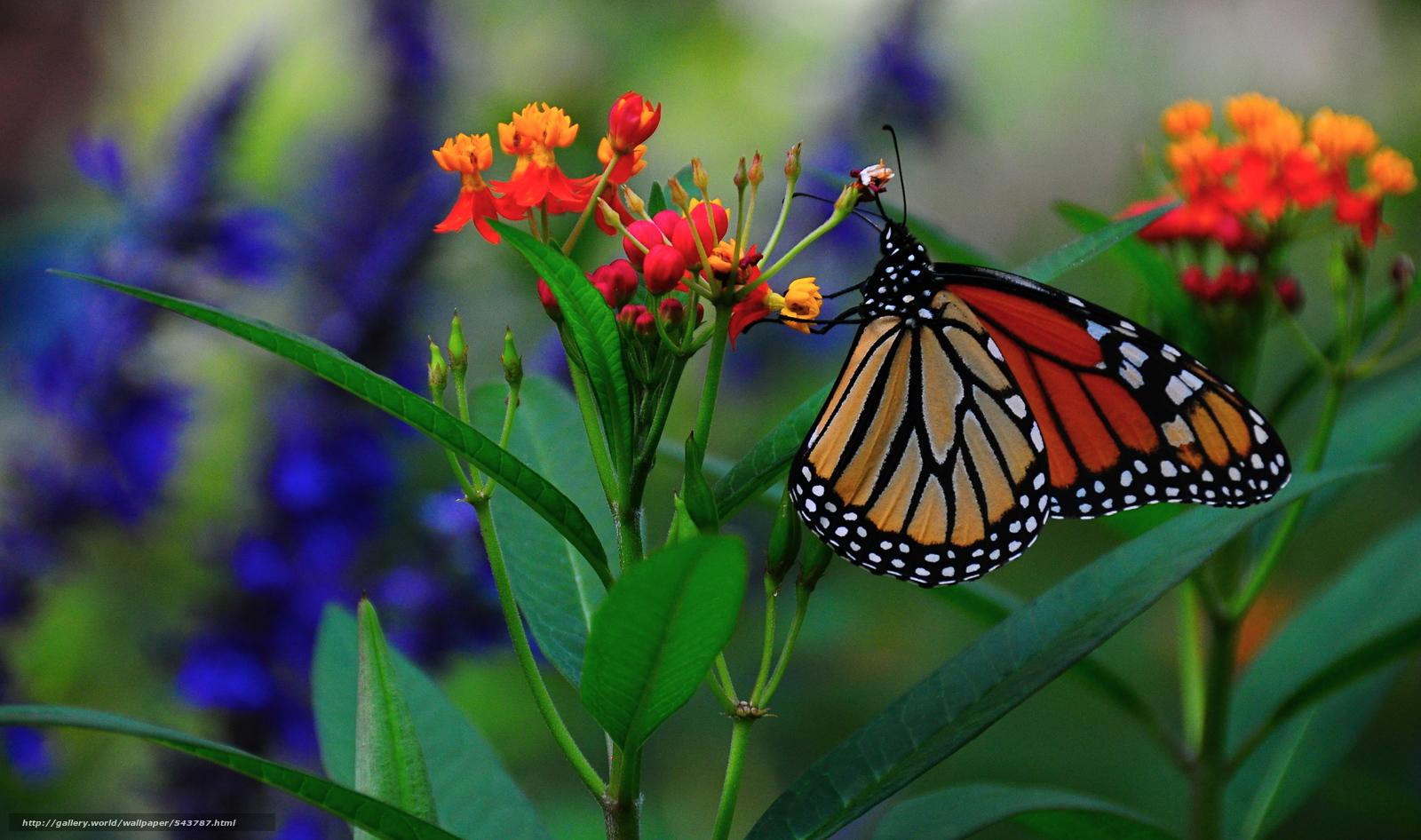 Обои бабочка растение макро цветы