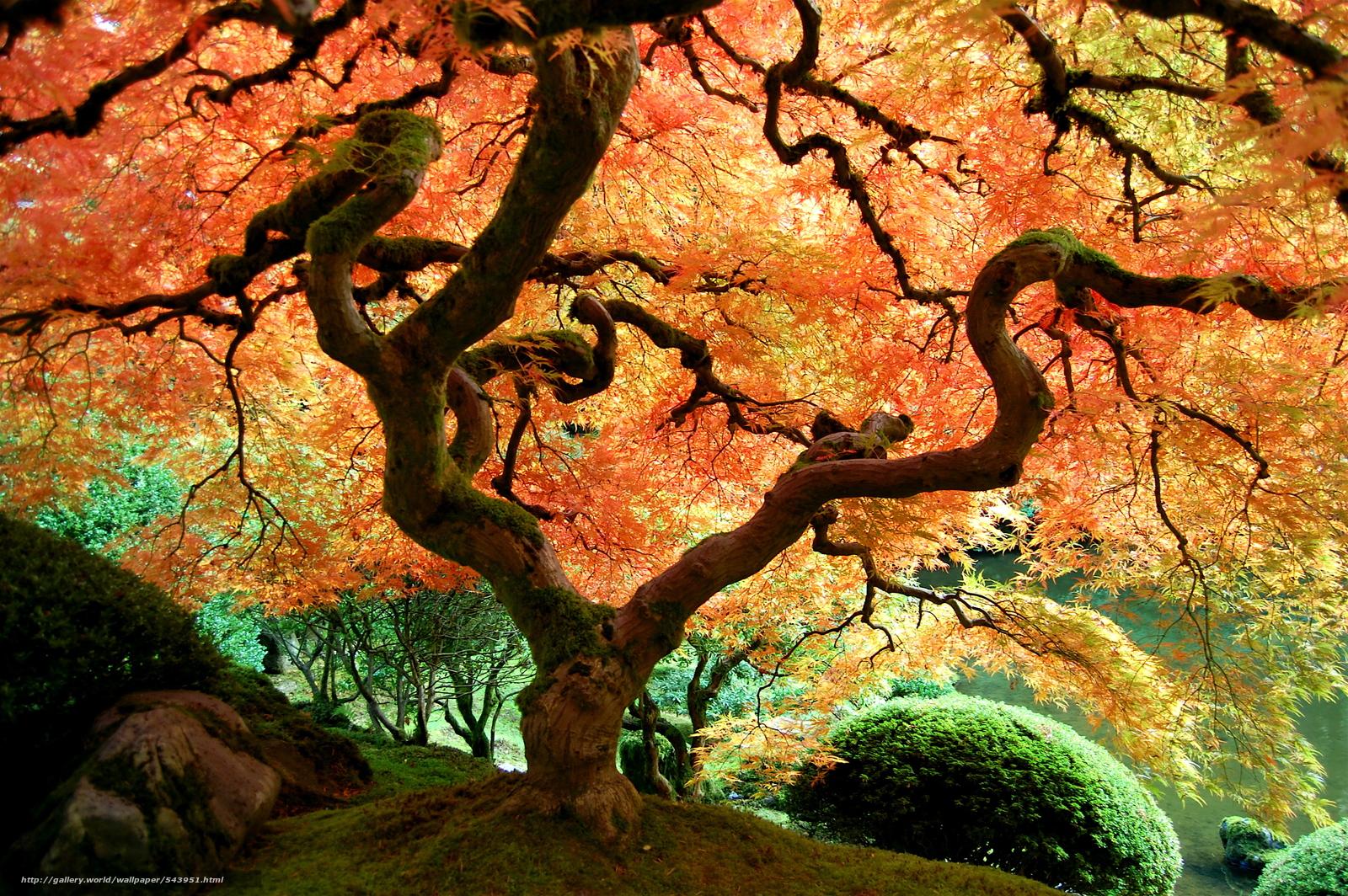tlcharger fond d 39 ecran jardin japonais portland arbres paysage fonds d 39 ecran gratuits pour. Black Bedroom Furniture Sets. Home Design Ideas