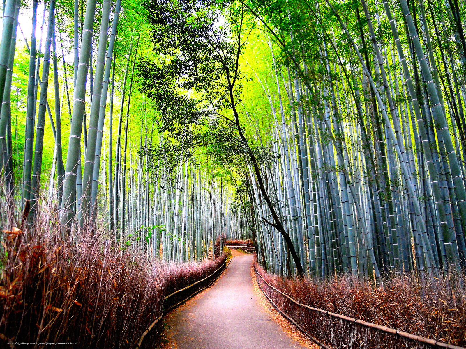 Download wallpaper bamboo forest road nature free desktop wallpaper in the resolution - Wallpaper 3000 x 4000 ...