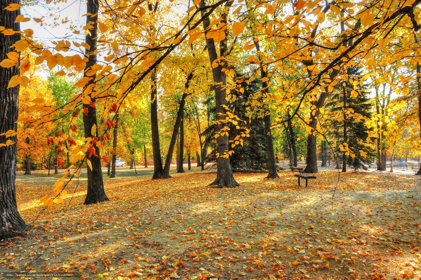 Download wallpaper autumn, park, trees, foliage free desktop