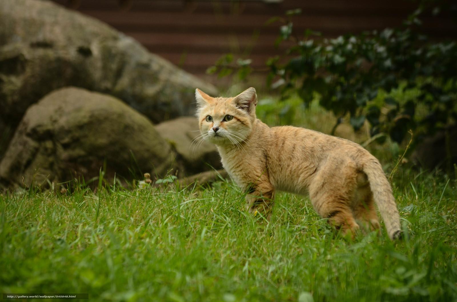 Svezia parken zoo di eskilstuna sabbia del gatto