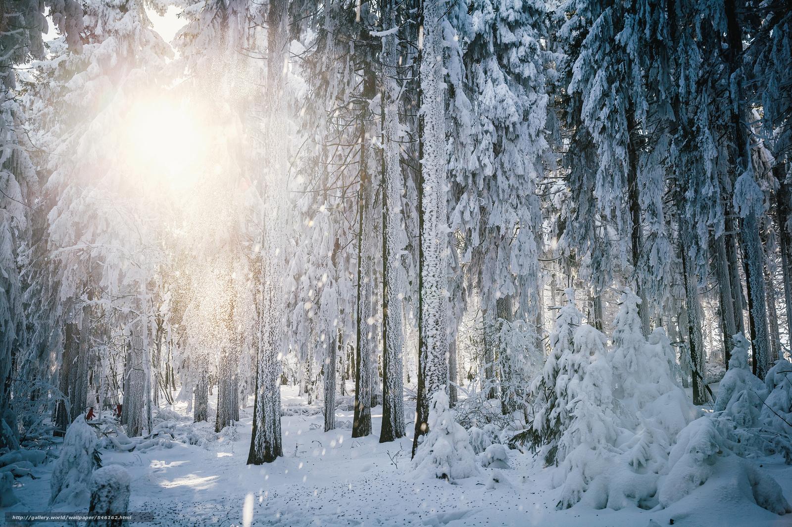 download wallpaper winter wonderland hochtaunuskreis