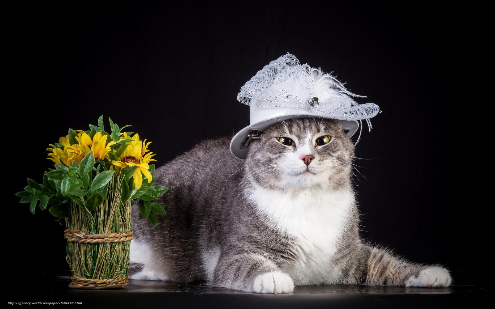 Scaricare Gli Sfondi Animali Animale Gatti Gatto Sfondi
