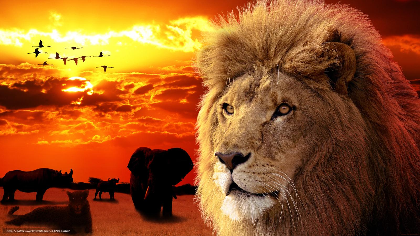 Скачать обои лев животное зверь