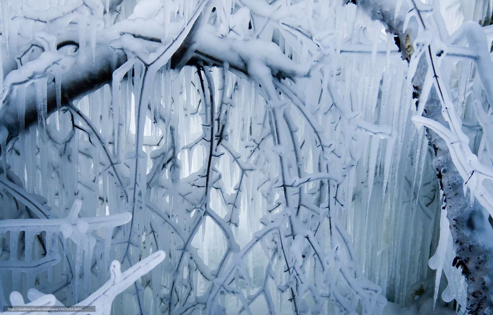 icicles wallpaper - photo #11