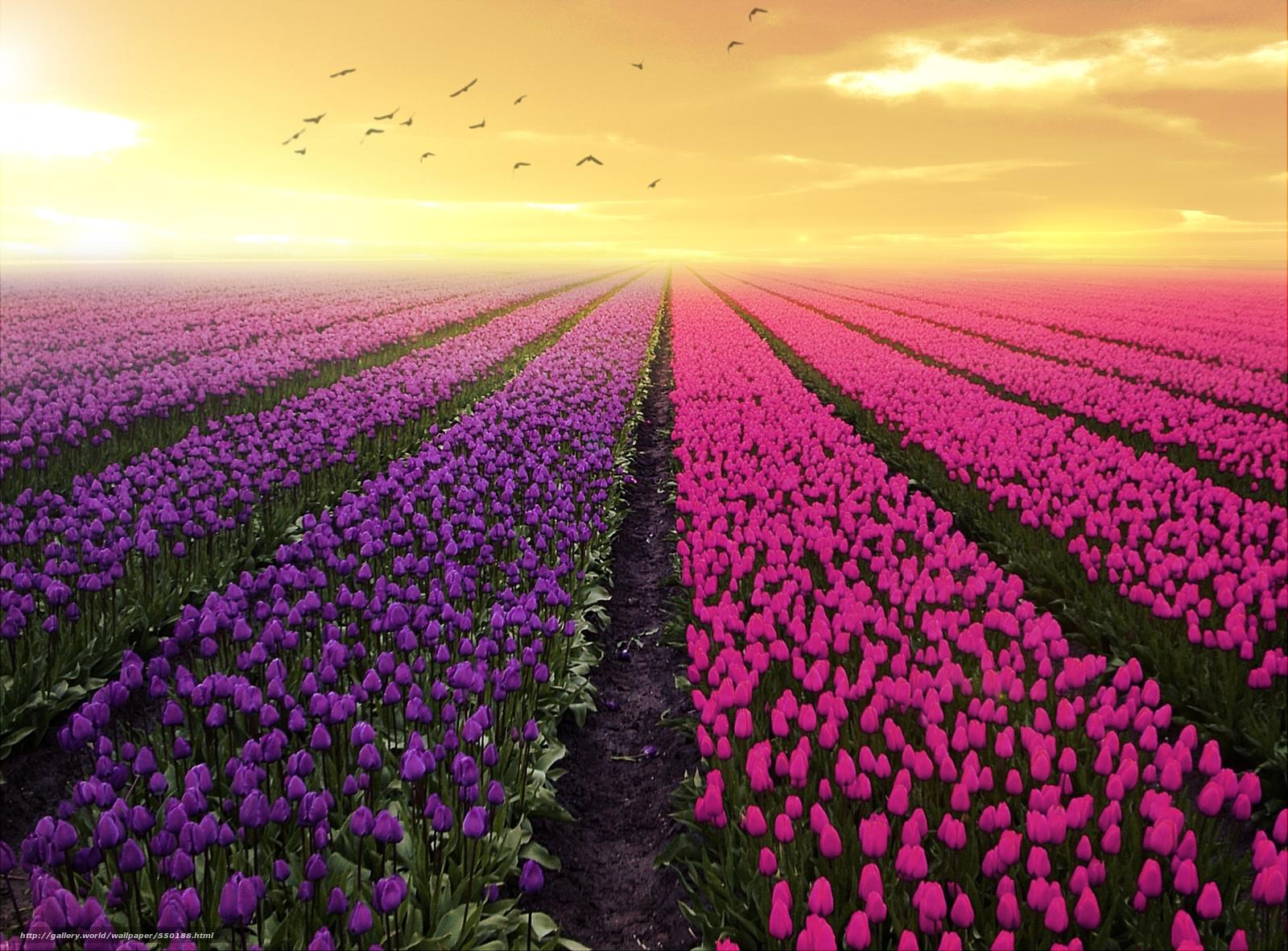 Scaricare gli sfondi co fiori 3d arte sfondi gratis per la
