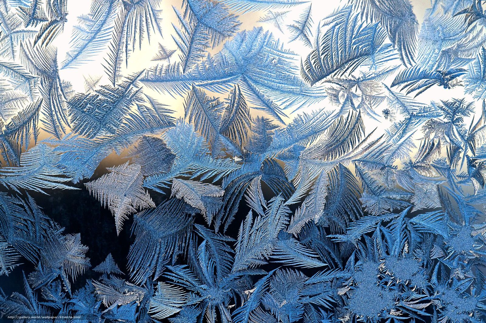 frost on glass wallpapers - photo #6