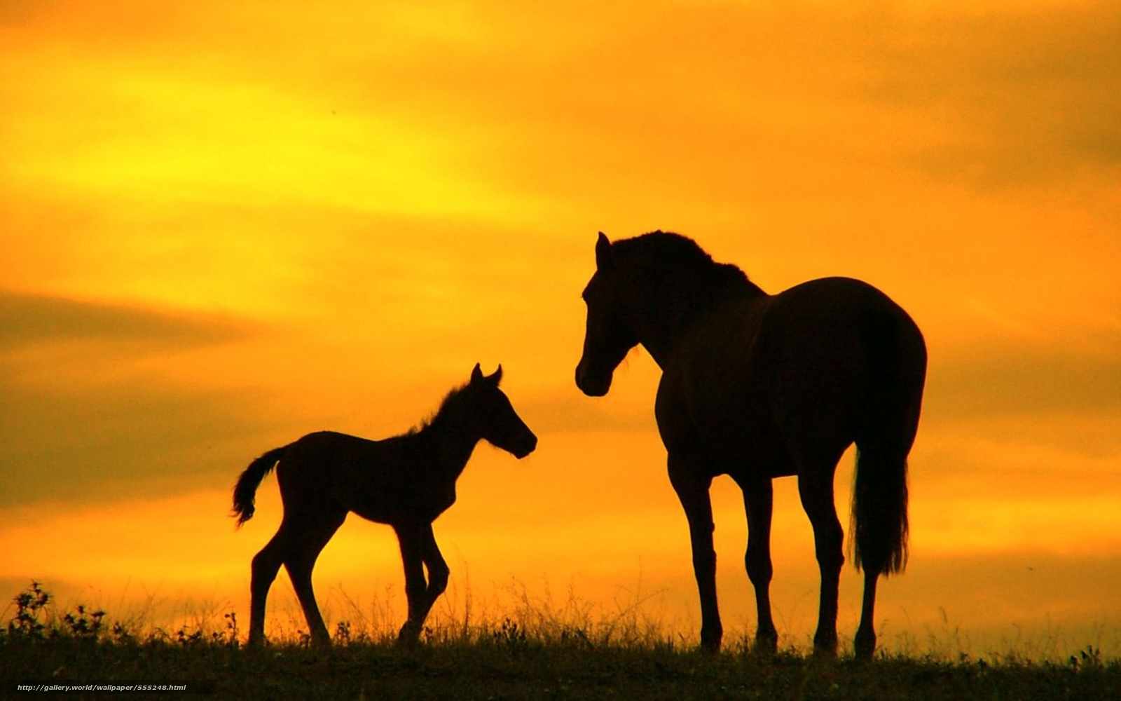 download wallpaper horses sunset - photo #6