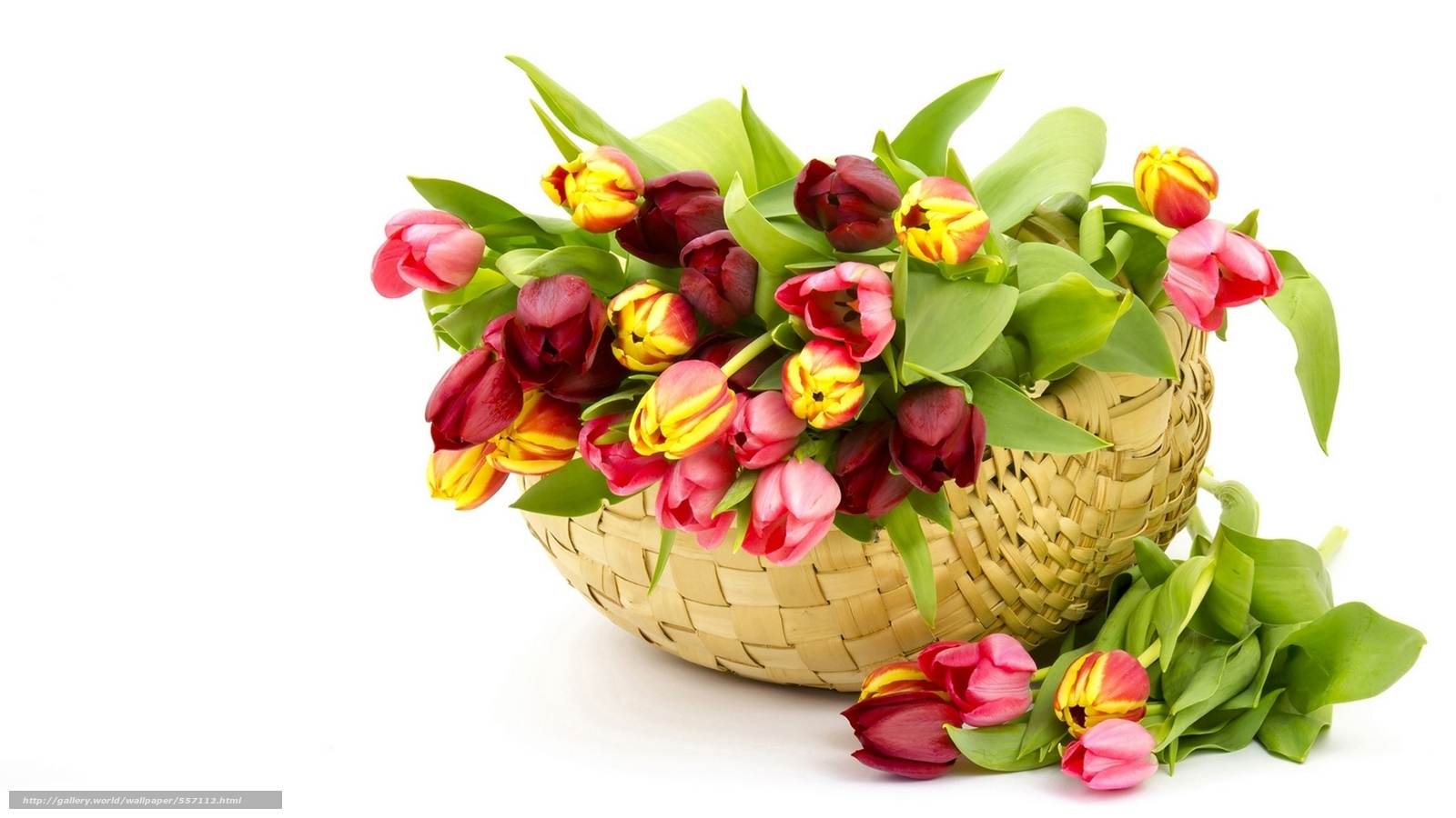 Download wallpaper nature flowers Flower basket free desktop wallpaper in