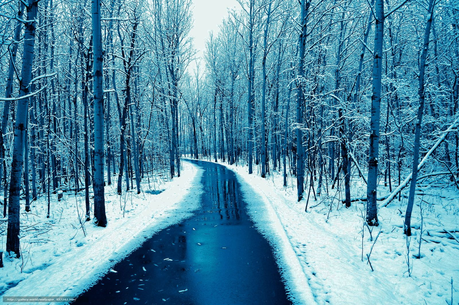 Tlcharger fond d 39 ecran for t petite rivi re paysage for Fond ecran gratuit hiver